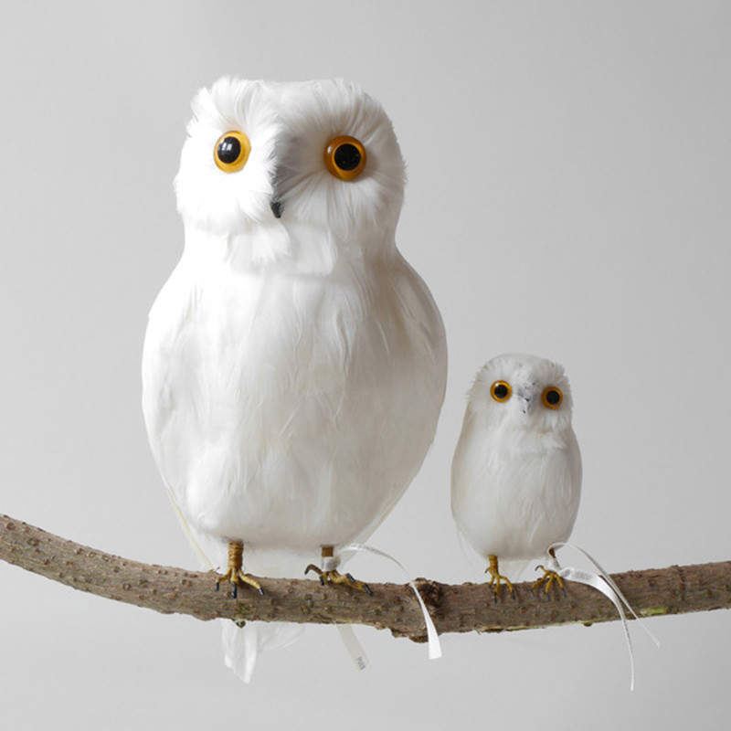 owlwhite_grande_Eastern_biological